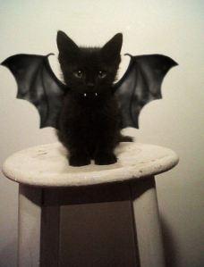 a.aaa-Vampire-Cat